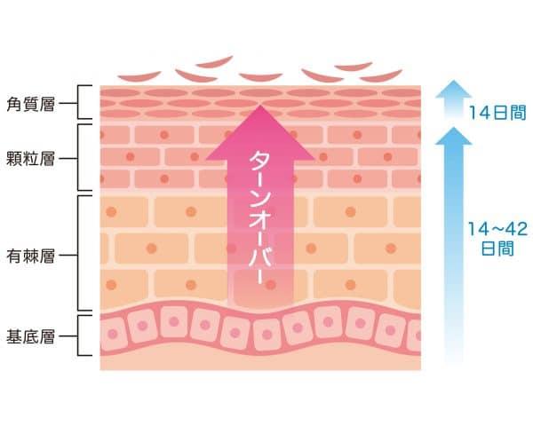 トレンチノインは、ターンオーバ(皮膚の代謝)を促進させることで黒ずんだ皮膚の脱色素効果があります。